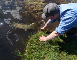 pike-catch-and-release-94
