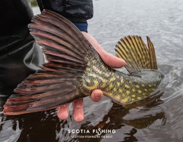 monster-pike-fishing-scotland-uk-1