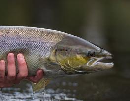 autumn-salmon-fishing-river-tweed-03