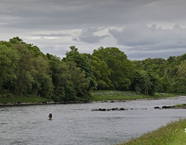 river-tay-salmon-guide