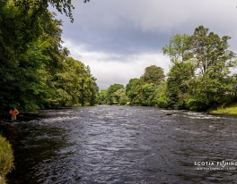river-teith-salmon-fishing-guide