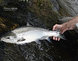 salmon-fishing-guide-river-tay