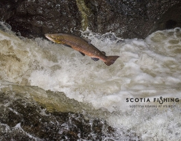 scotland-salmon-fishing