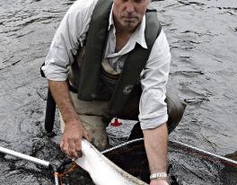 tay-spring-salmon