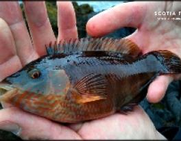 lrf-fishing-scotland