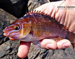 saltwater-lure-fishing-scotland