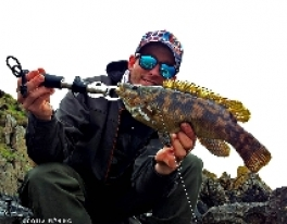 wrasse-fishing-scotland-1