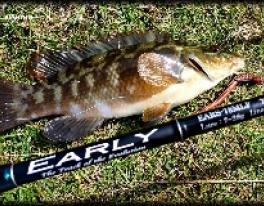 wrasse-fishing-scotland-2