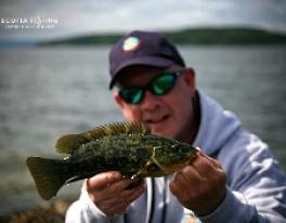 wrasse-lure-fishing-scotland