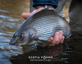 grayling-fishing-near-edinburgh-93
