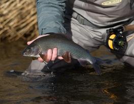 grayling-fishing-trip-scotland-078
