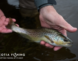 river-tweed-trout-guide-012