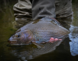 grayling-images-scotland-1
