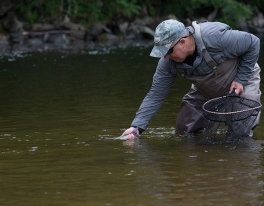 grayling-fly-fishing-scotland-0112