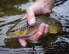 wild-trout-edinburgh-01