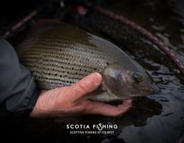 scotland-grayling-fishing-011