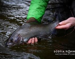 grayling-fishing-in-winter