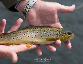 loch-leven-brown-trout-fly-fishing
