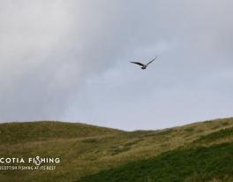 osprey-over-loch
