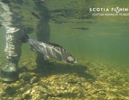 pesca al temolo in Scozia