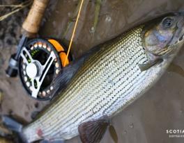 grayling-fishing-scotland-1