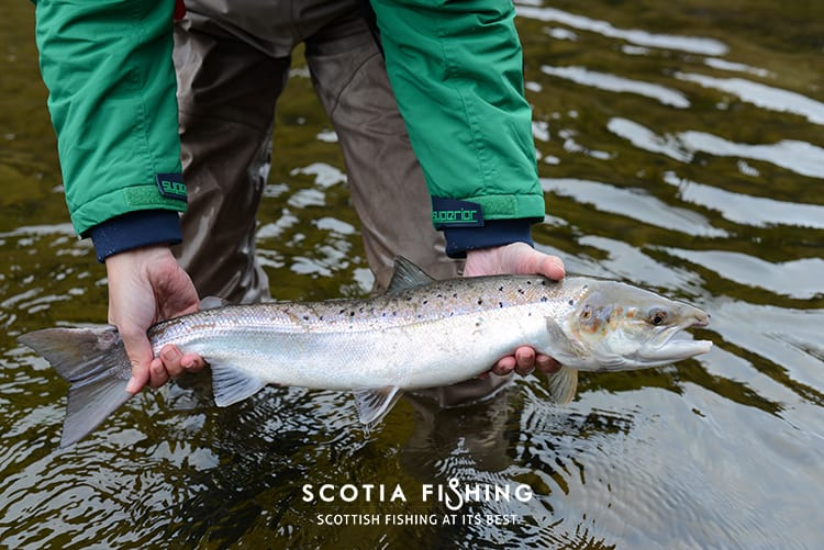 salmon-kelt-caught-in-spring-0