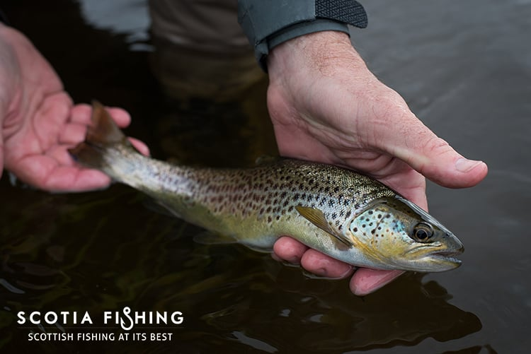 trout-fly-fishing-trips-near-loch-lomond-cameron-house
