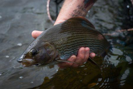 fishing-report-12