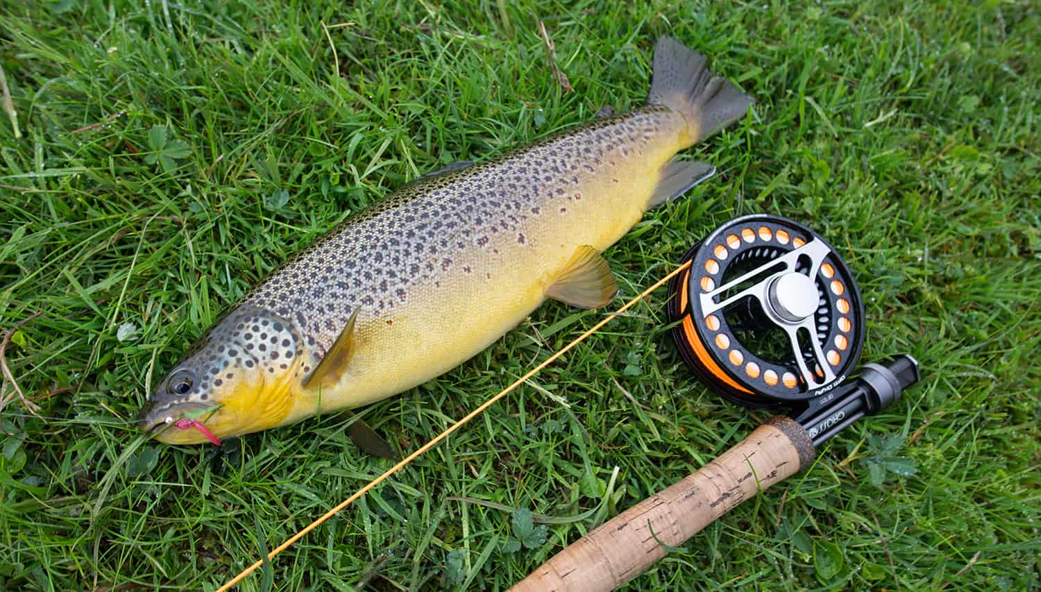 fishing-in-icleand-brown-trout