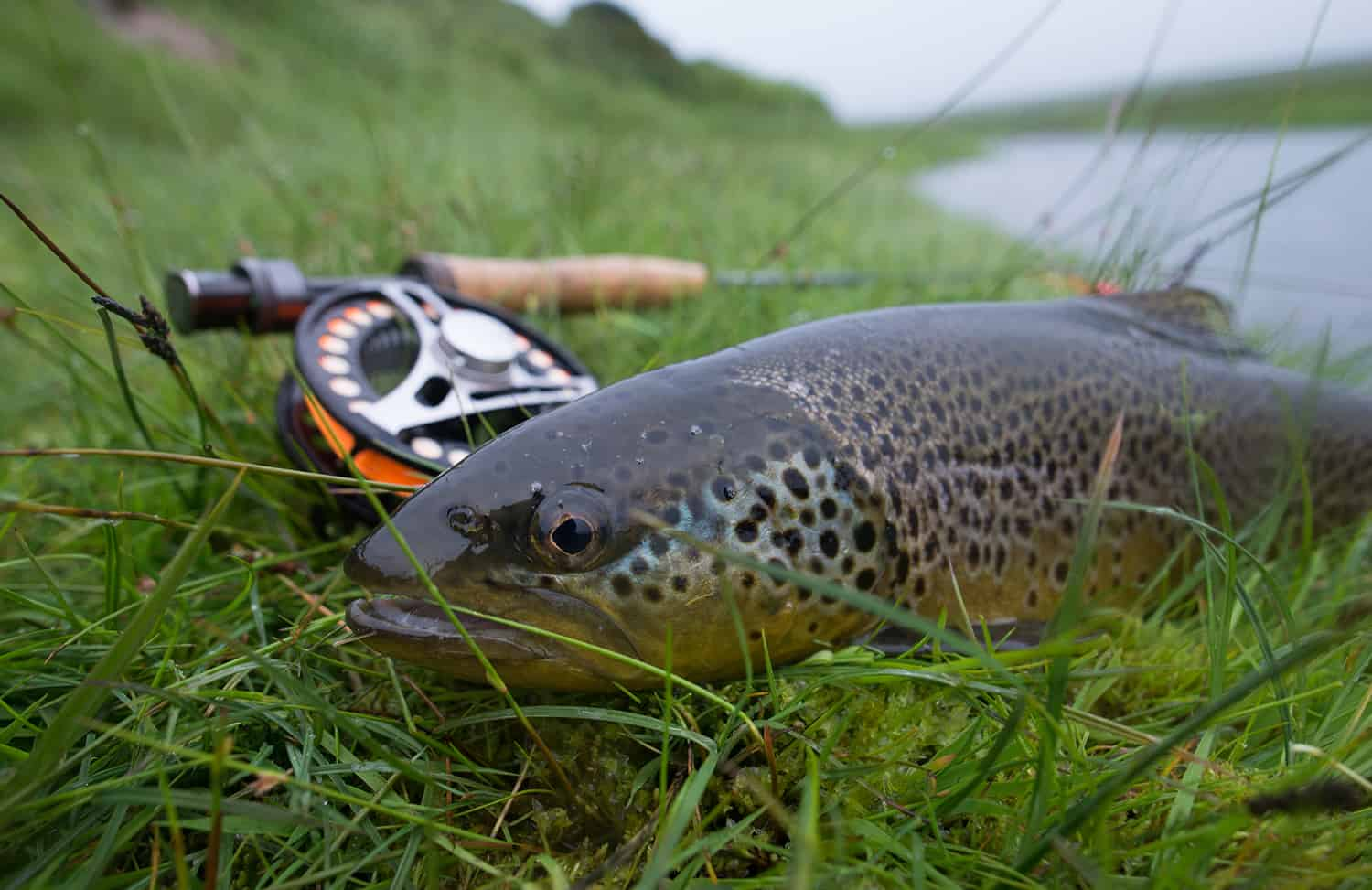 iceland-brown-trout-fly-fishing