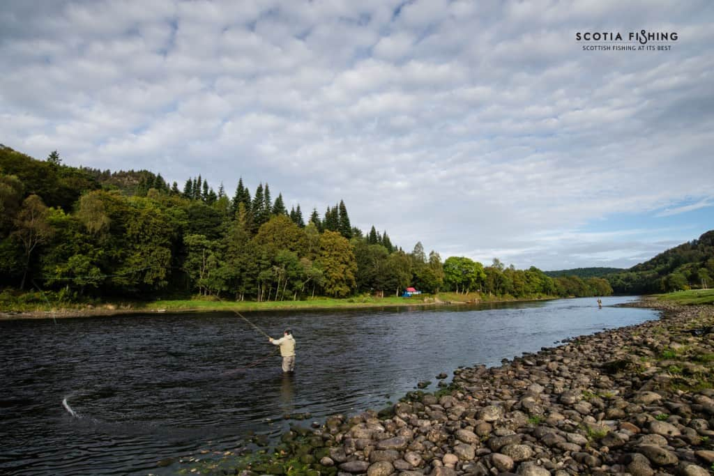 river-tay-salmon-september