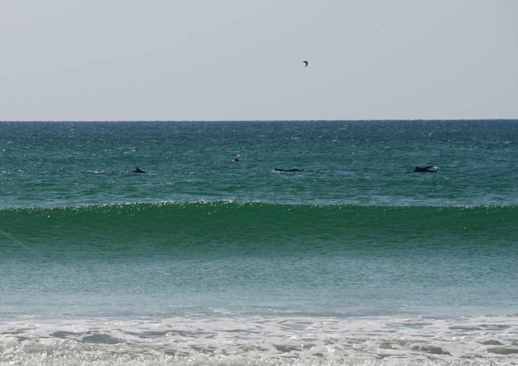 dolphins-oman