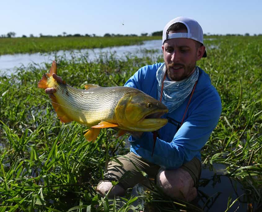 big-golden-dorado-argentina