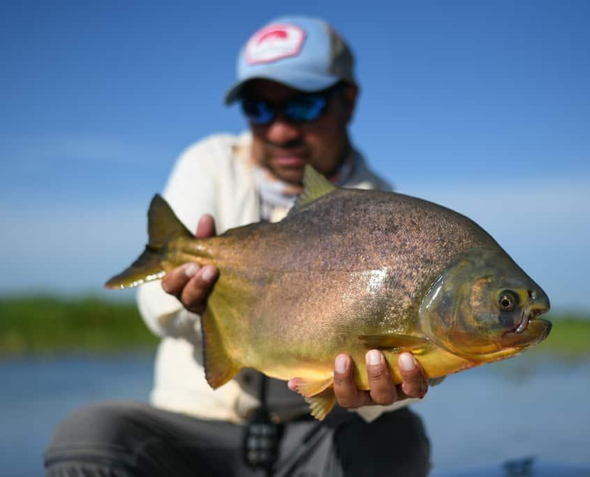 pacu-corrientes-argentna