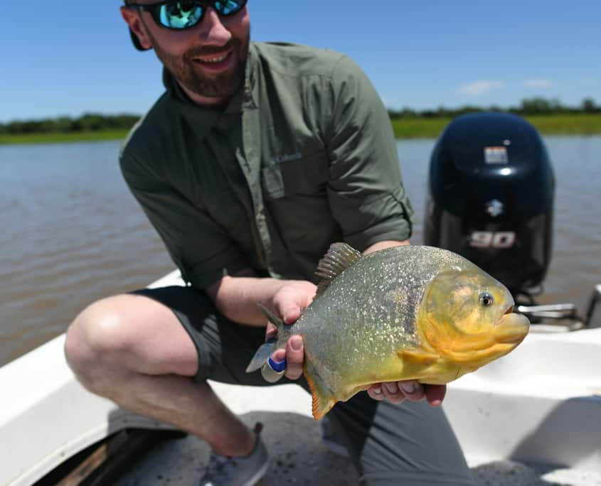 piranha-fly-fishing-palometa