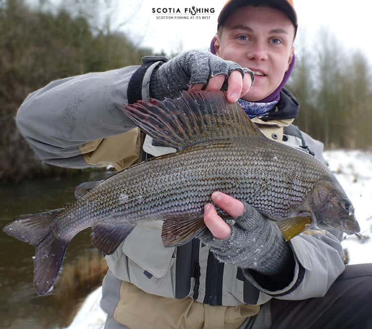 trout and grayling fishing in scotland, Fly Fishing Bait