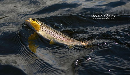 loch-fishing-in-scotland