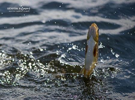fishing-in-scotland-june