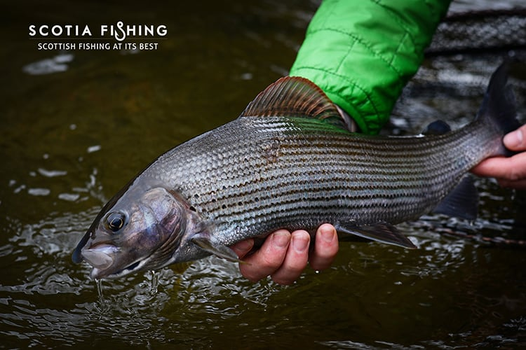 fly fishing near glasgow for salmon, trout, grayling & pike, Fly Fishing Bait