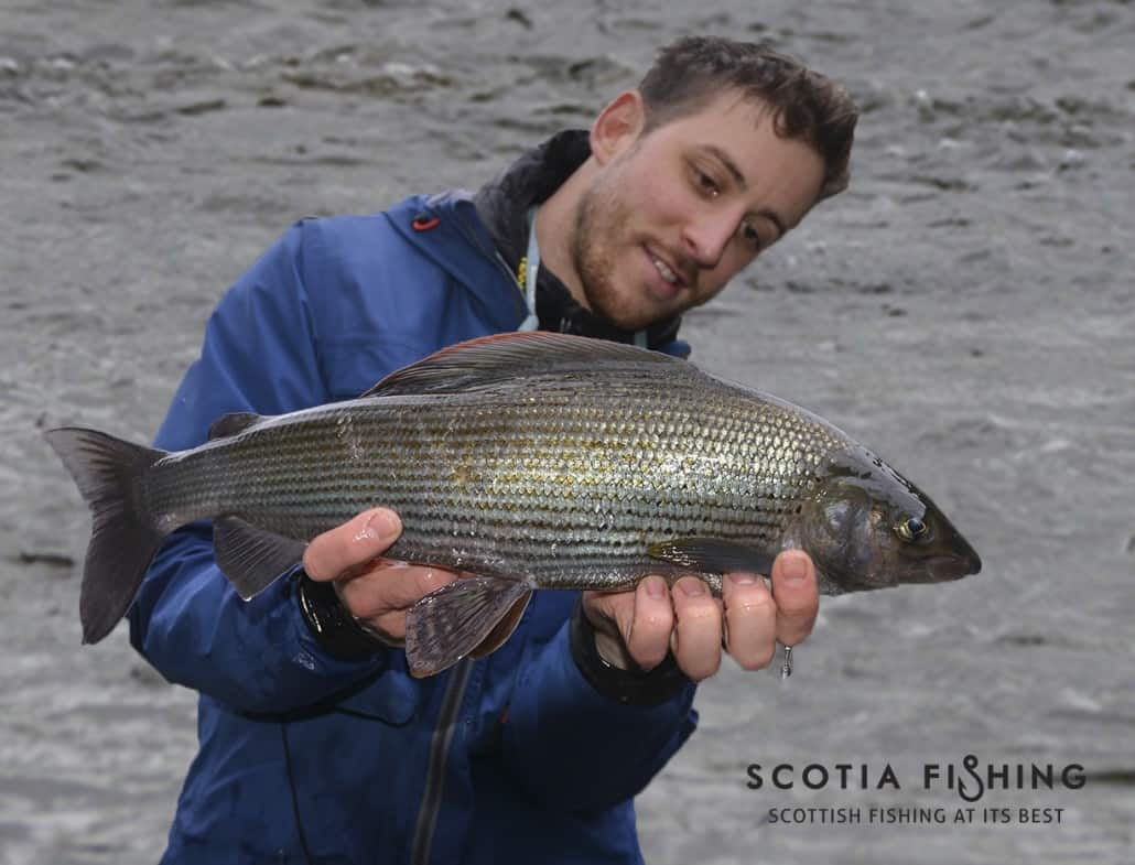 march-grayling-in-scotland