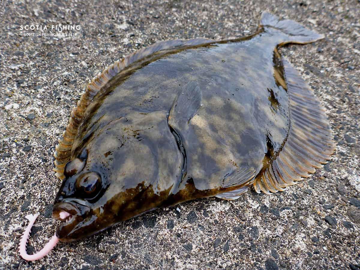 saltwater fishing scotland | saltwater fly fishing - scotia fishing, Fly Fishing Bait