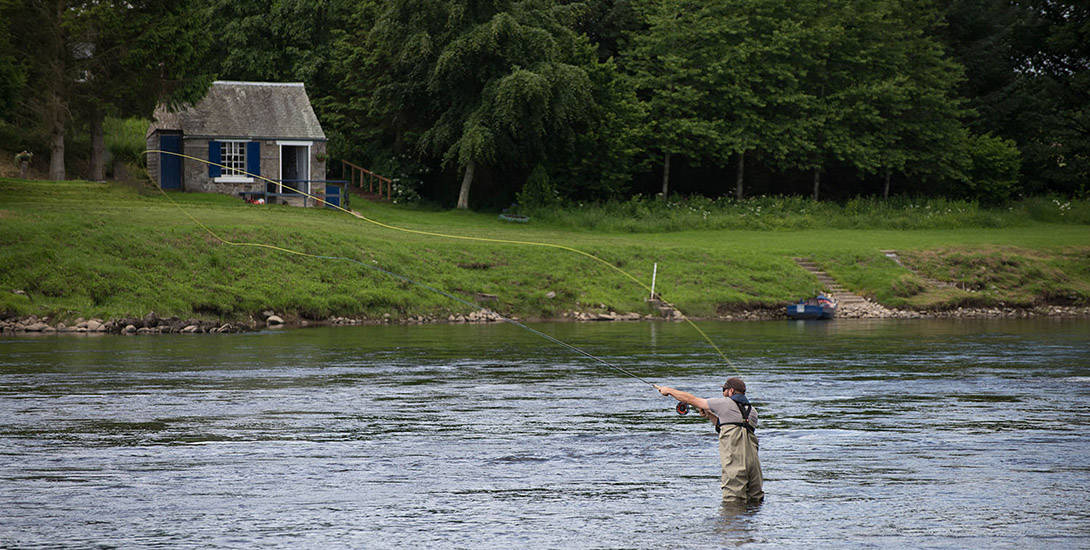 salmon-fish-scotland-2