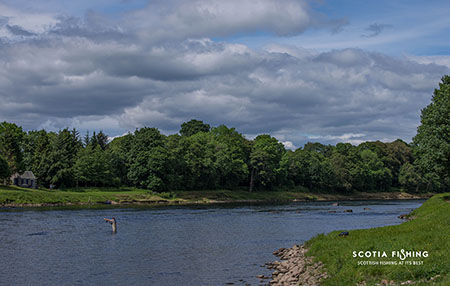 salmon-fishing-river-tweed