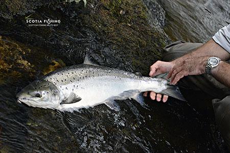 salmon-fly-fishing-near-st-andrews-scotland