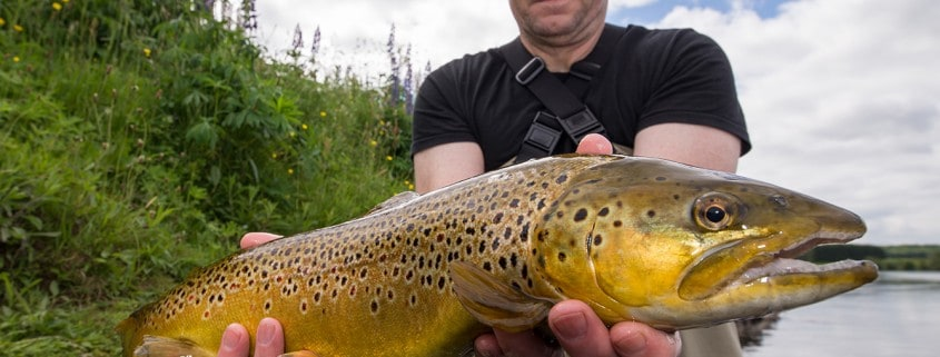 tay-trout-fishing-near-dundee