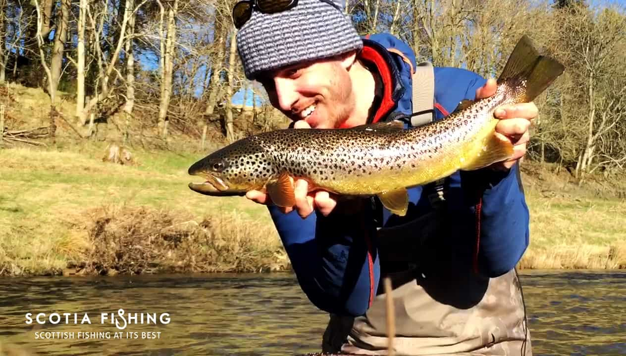big-brown-trout-from-sottish-river-in-march