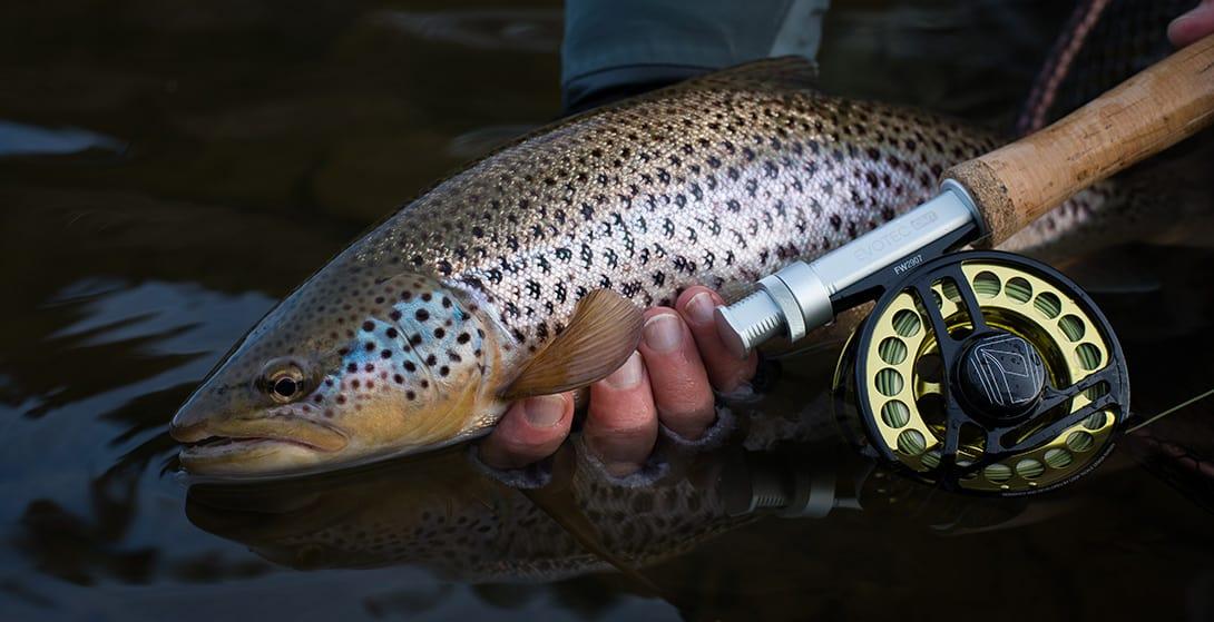 trout-fish-scotland-1
