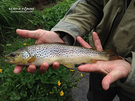 trout-fly-fishing-in-scotland