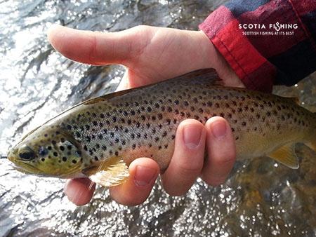 tweed-fishing-in-scotland