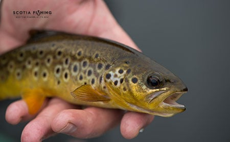 trout-fishing-trips-in-scotland
